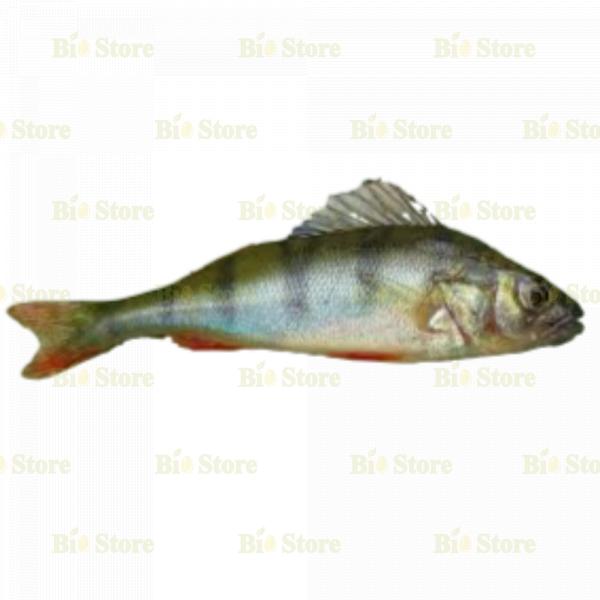 BİOTAM FISH SUDAK - 1 KG