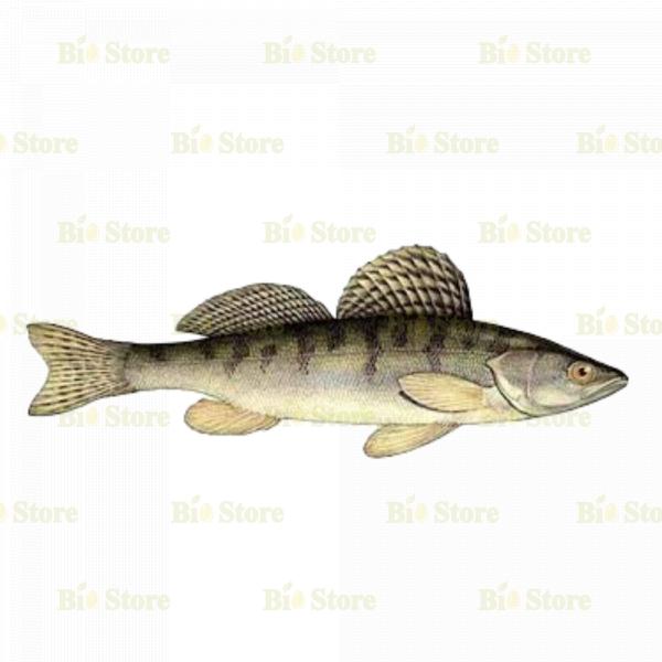 BİOTAM BERJ FISH - 1 KG