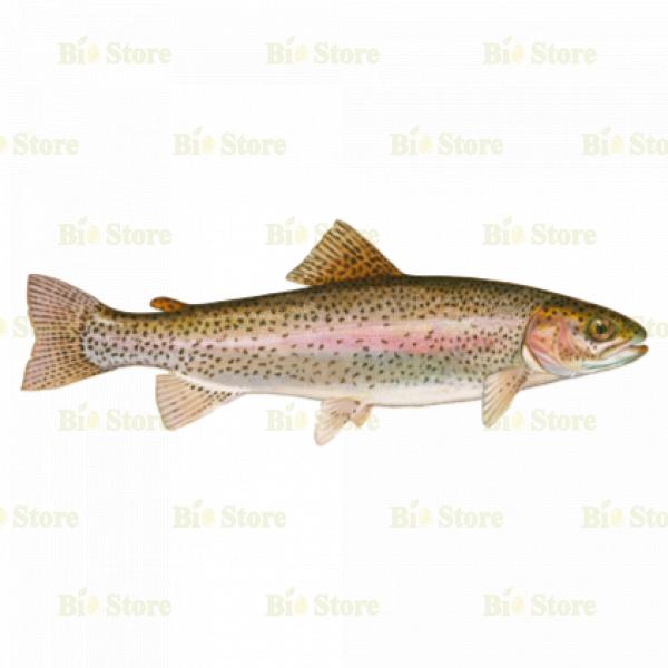 BİOTAM FISH TRUT- 1 KG